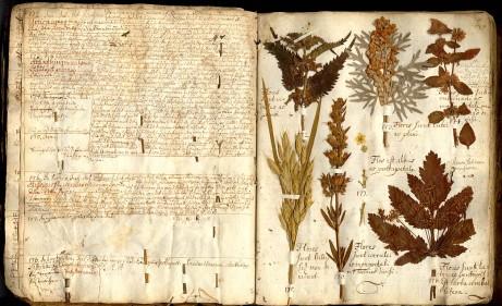 Herbarium de Linneo